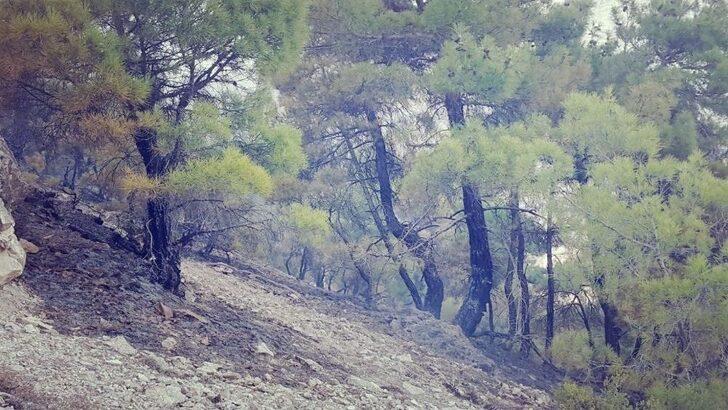 Endüstriyel Plantasyon mu, Ormanların Özelleştirilmesi mi?